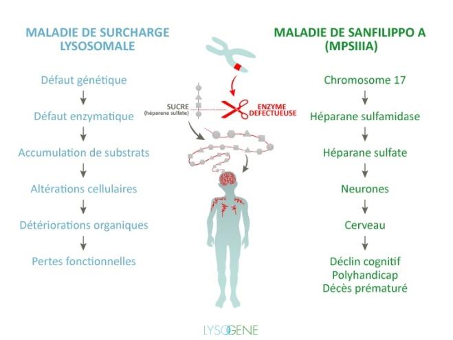 Infografia MPSIIIA Lysogene