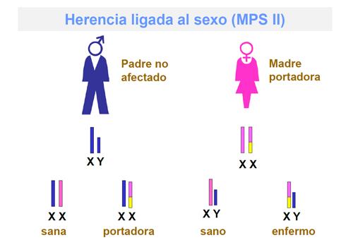 """Mucopolisacaridosis tipo 2 (MPSII):"""" incluso las portadoras sanas pueden desarrollar algunos síntomas del síndrome deHunter"""""""