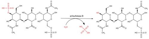 Descripción Reacción catalizada por la arilsulfatasa B. En rojo, los grupos químicos implicados en la reacción.