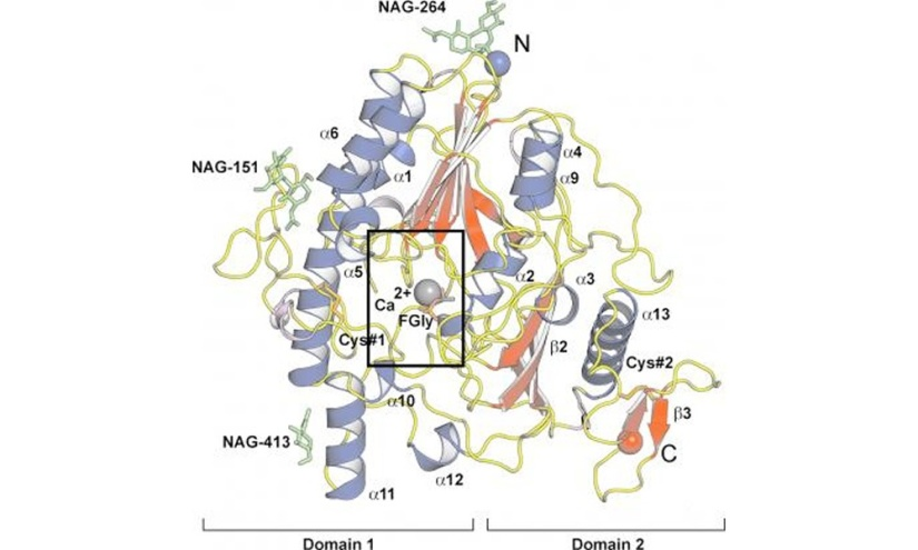 Patologia molecular de la mucopolisacaridosis IIIA