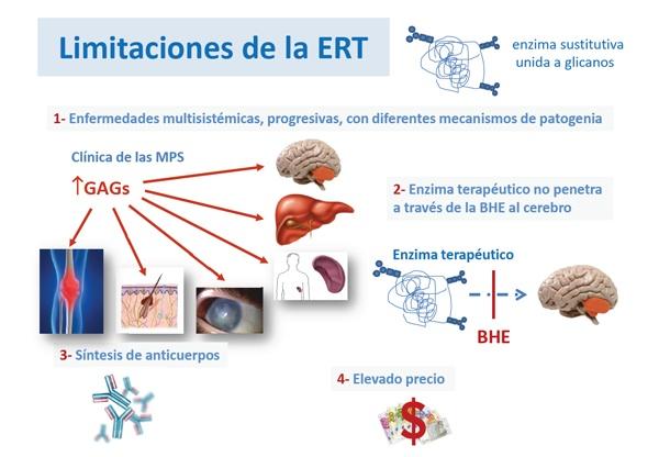 Las respuestas inmunes a las ERT.